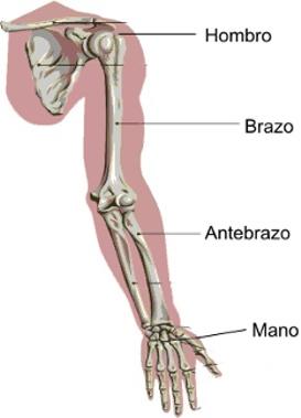 El hormigueo del brazo izquierdo Las posibles causas