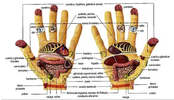 Kanizon el ungüento el hongo de las uñas