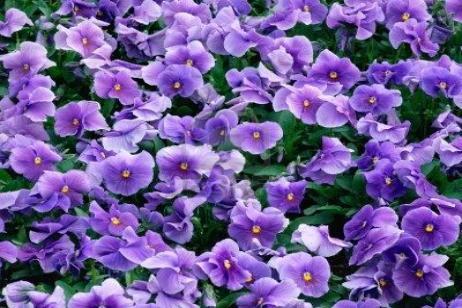 venta flor getafe: